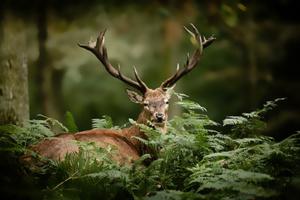 Blick durch Jagdfernglas